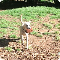 Adopt A Pet :: Ranger - Acworth, GA