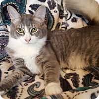 Adopt A Pet :: Foxy - Raritan, NJ