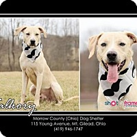 Adopt A Pet :: Valkory - Mt. Gilead, OH