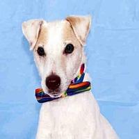 Adopt A Pet :: FRED - Hampton Bays, NY
