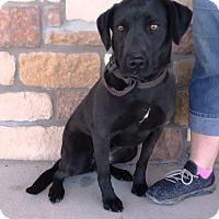 Adopt A Pet :: Felisha - Artesia, NM