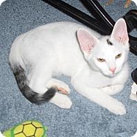 Adopt A Pet :: Blizzard - Richmond, VA