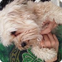 Adopt A Pet :: Sassy - Miami, FL