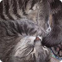 Adopt A Pet :: smoochie - Little Neck, NY