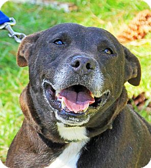 Shepherd (Unknown Type) Mix Dog for adoption in Jupiter, Florida - Shorty