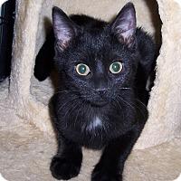 Adopt A Pet :: Lexie - Richmond, VA