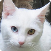 Adopt A Pet :: Athena - Davis, CA
