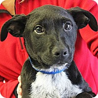 Adopt A Pet :: Andy - Huntley, IL