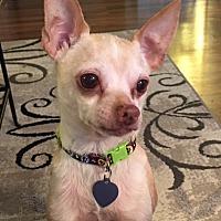Adopt A Pet :: Artie - Vacaville, CA
