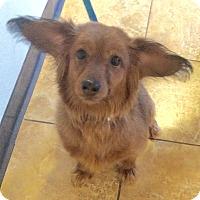 Adopt A Pet :: Puffy - Oak Ridge, NJ
