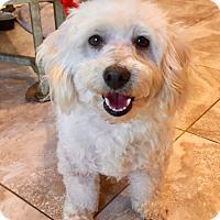 Adopt A Pet :: Casper - Santa Ana, CA
