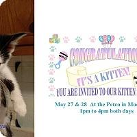 Adopt A Pet :: CASANOVA - Northfield, OH