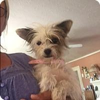 Adopt A Pet :: Poppy - Thousand Oaks, CA