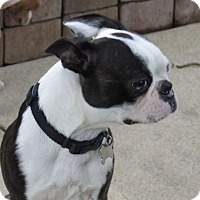 Adopt A Pet :: Tucker - San Antonio, TX