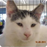 Adopt A Pet :: Cody - Riverside, RI