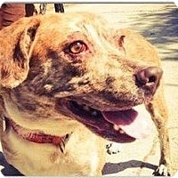 Adopt A Pet :: Izzy - North Hollywood, CA