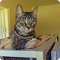 Adopt A Pet :: Felice - Victor, NY