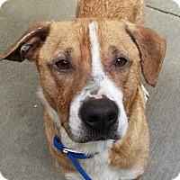 Adopt A Pet :: Kane*ADOPTED!* - Chicago, IL