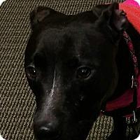 Adopt A Pet :: Mallie - Thomasville, NC