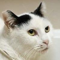 Adopt A Pet :: Barda - Medford, MA