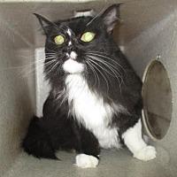 Adopt A Pet :: Lux - Reno, NV