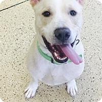 Adopt A Pet :: Jax - Marion, IN