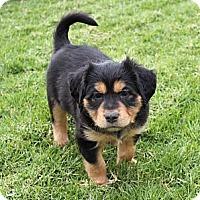 Adopt A Pet :: Velma - La Habra Heights, CA