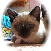 Adopt A Pet :: Barbosa - Shelton, WA