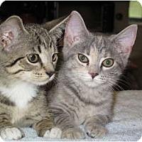 Adopt A Pet :: Dusty - Port Republic, MD