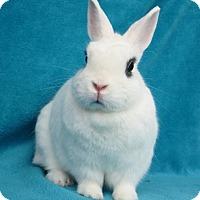 Adopt A Pet :: Coconut - Los Angeles, CA