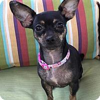 Adopt A Pet :: Sweetie - Encino, CA