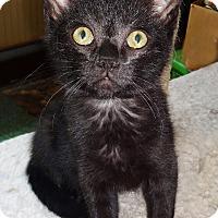 Adopt A Pet :: Dyson - N. Billerica, MA