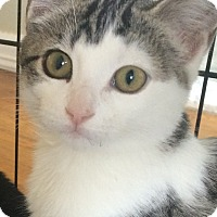 Adopt A Pet :: Pearl - Long Beach, NY