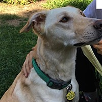 Adopt A Pet :: Henry- Foster needed! - Rochester, NY