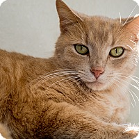 Adopt A Pet :: Rocket - Martinsville, IN