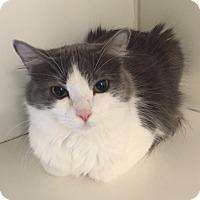Adopt A Pet :: Skye - San Leon, TX