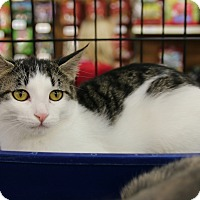 Adopt A Pet :: Squeakers - Rochester, MN