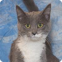 Adopt A Pet :: Ali - Elmwood Park, NJ