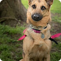 Adopt A Pet :: Sofie - Sacramento, CA