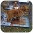 Photo 3 - Terrier (Unknown Type, Medium)/Corgi Mix Dog for adoption in Fowler, California - Baxter