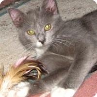 Adopt A Pet :: Harmony - Dallas, TX