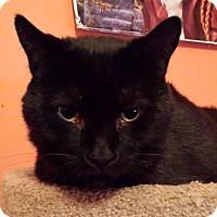 Adopt A Pet :: carl - brewerton, NY