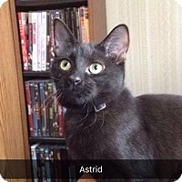 Adopt A Pet :: Astrid - Dale City, VA