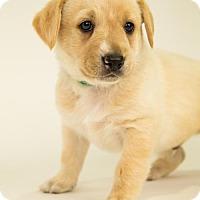 Adopt A Pet :: Hamilton - Centreville, VA