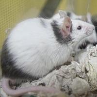 Adopt A Pet :: Monty - Benbrook, TX