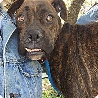 Adopt A Pet :: Solar - Austin, TX