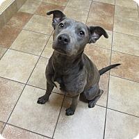 Adopt A Pet :: Krystal *Petsmart GB* - Appleton, WI