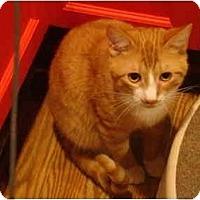 Adopt A Pet :: Weezy - Muncie, IN