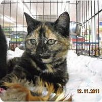 Adopt A Pet :: Jillian - Riverside, RI