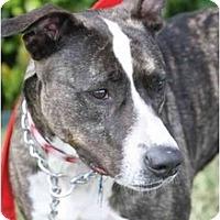 Adopt A Pet :: Crystal - DFW, TX